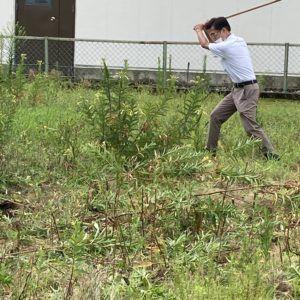 草刈りです