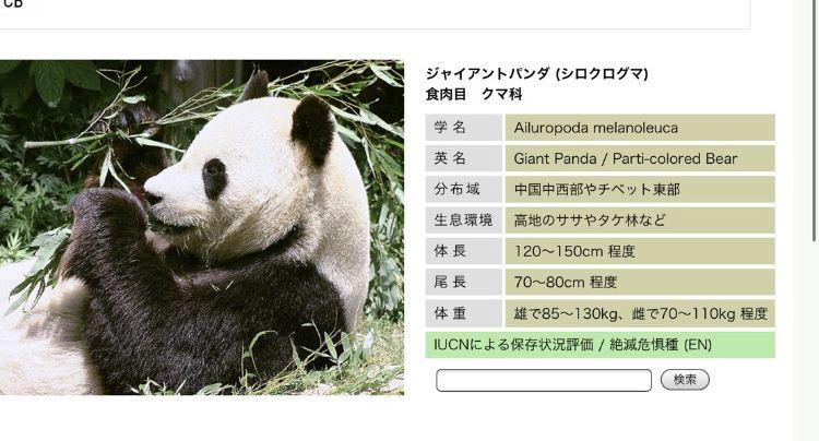 パンダの写真です