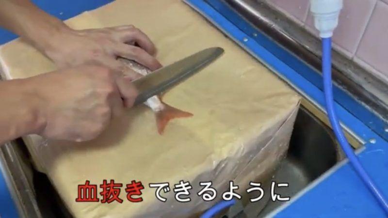 スーパーで買った鯛の血抜きです